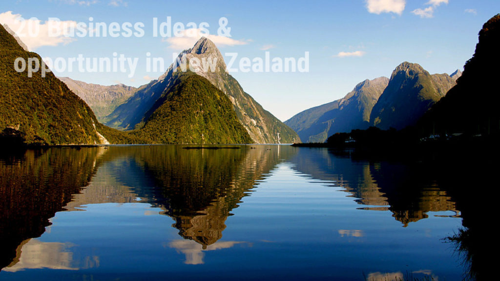 business ideas in New Zealand