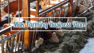 Dairy Farming Business Plan & Opportunity – Stepwise Guide