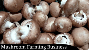 Mushroom Farming Business Plan: Step by Step Guide