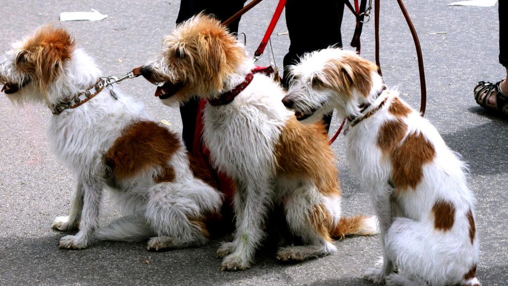 Dog Walker - Small Business Ideas